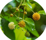 How Much Kratom Should I Take For Opiate Withdrawal